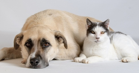 Kutya vagy macska?